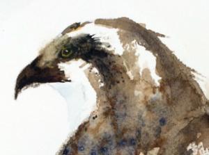 Steve Philbrook Watercolors